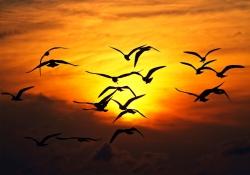 """Meditação de por do sol - """"Em espírito no dia do Senhor"""""""